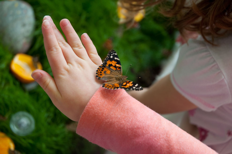 A beautiful orange and black butterfly perched on a child's hand.