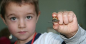 Boy holding a small snail looking out of its shell